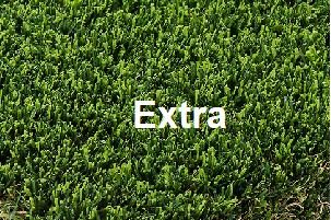 """דשא סינטטי 1 מ""""ר - Extra"""