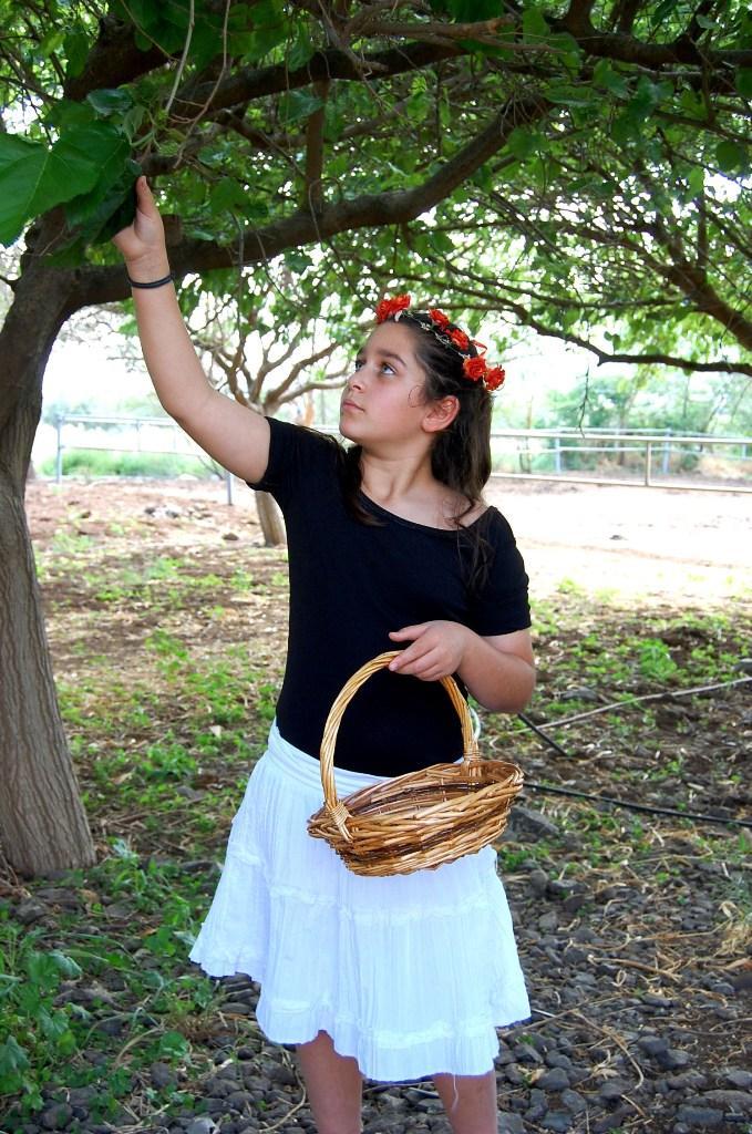 קטיף תותי עץ בדבורת התבור בשבועות