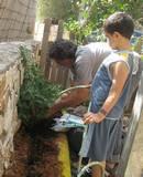 הילדים עובדים בגינה עם גידי