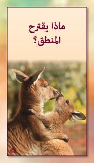 קלפי מנטורי בערבית- ألمستشار الذاتي- ألأسئلة التي تفتح الطريق 14