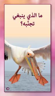 קלפי מנטורי בערבית- ألمستشار الذاتي- ألأسئلة التي تفتح الطريق 15