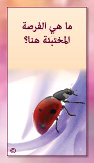 קלפי מנטורי בערבית- ألمستشار الذاتي- ألأسئلة التي تفتح الطريق 17
