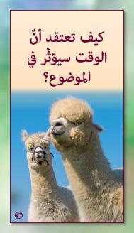 קלפי מנטורי בערבית- ألمستشار الذاتي- ألأسئلة التي تفتح الطريق 21