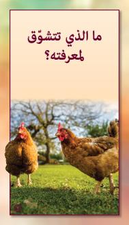קלפי מנטורי בערבית- ألمستشار الذاتي- ألأسئلة التي تفتح الطريق 7