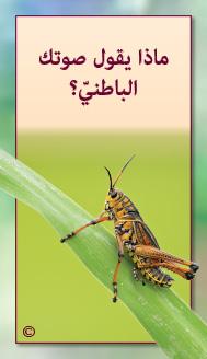 קלפי מנטורי בערבית- ألمستشار الذاتي- ألأسئلة التي تفتح الطريق 8