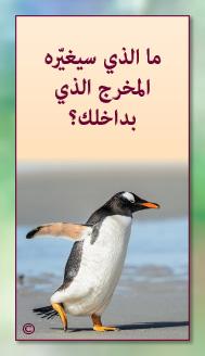 קלפי מנטורי בערבית- ألمستشار الذاتي- ألأسئلة التي تفتح الطريق 9