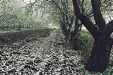 יצירת פרספקטיבה: הקרוב גדול , ככל שמתרחקים , נעשים העצים קטנים