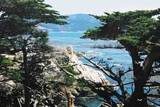 תכנון מרכיבי התמונה עם מסגור בחזית התמונה בעזרת העצים