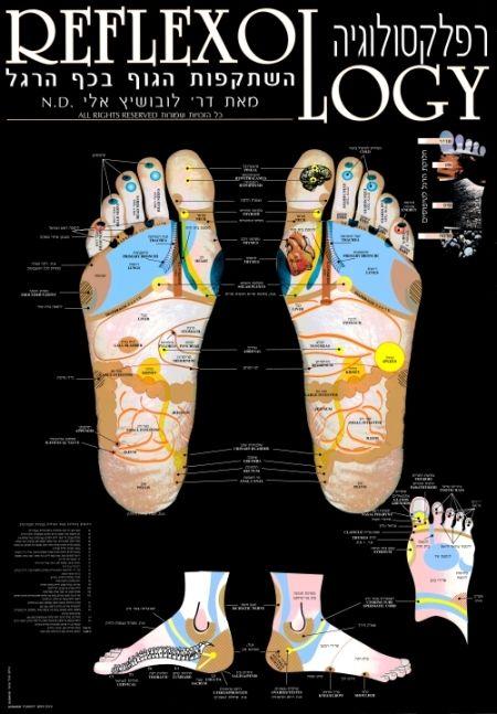 מפת רפלקסולוגיה - לובושיץ