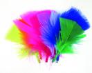 נוצות צבעוני קטנות