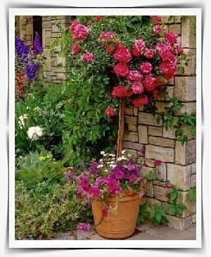 כד פורח עם ורד על גזע בכניסה לבית