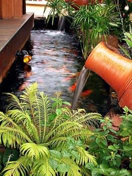 דגי זהב וצמחי מים