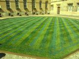 דשא בחצר המרכזית בקולג´ באוקספורד
