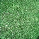 """דשא סינטטי לגינה לבד 10 מ""""מ. חסר זמנית במלאי !"""