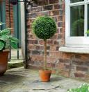 עץ כדורי מלאכותי 02816