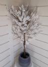 פיקוס 1.1 מטר לבן