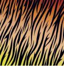 מדבקות לקרמיקה נמר