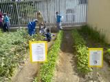 """עבודה בגינה,בי""""ס עציון קרית מלאכי (אילנה)"""