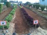 """עבודה בגינה, בי""""ס אוהל מאיר 2011- אילנה"""
