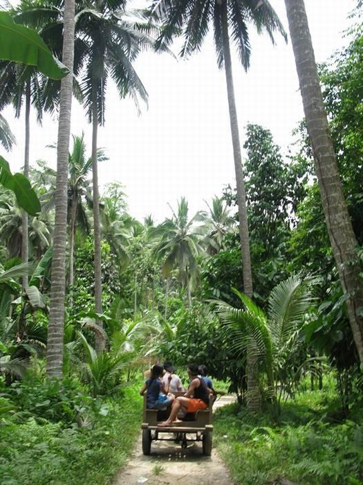 ג'ונגלים בפיליפינים
