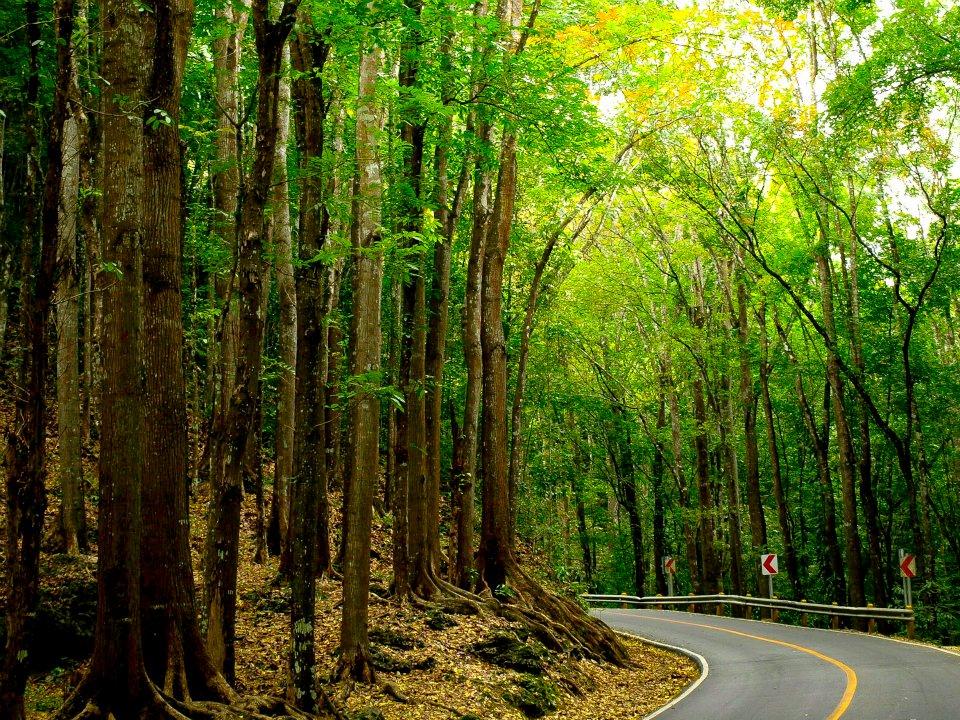 יער בילאר, בוהול