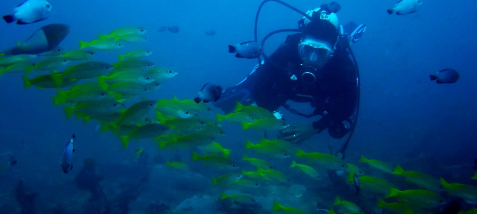 אטרקציות בפיליפינים - צלילה