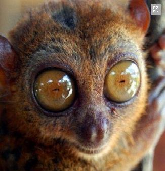 עטלפים בפיליפינים