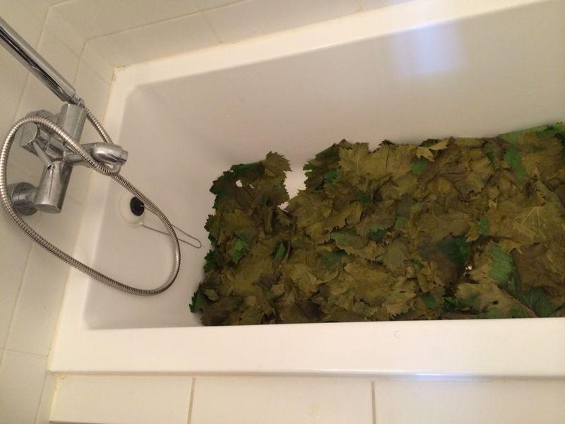 אמבטיה מלאה בעלי גפן