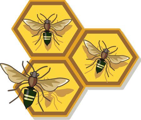 דבש דבורים