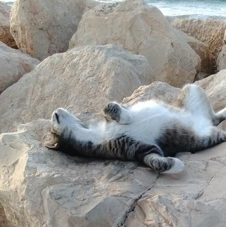 חתול שוכב על סלע בים