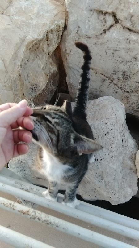 חתול על חוף הים