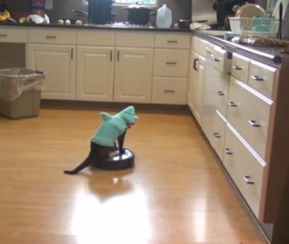 חתול שואב אבק