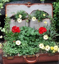 עציץ ממזוודה ישנה