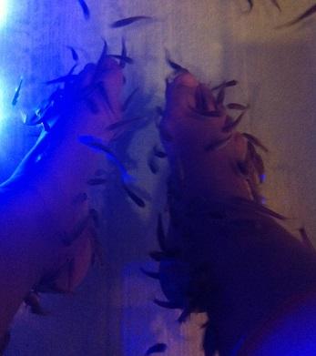 פדיקור ספא דגים