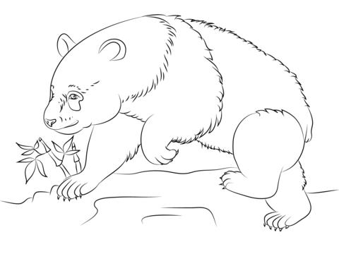דובי פנדה