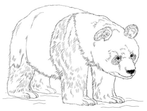 דוב פנדה ענק