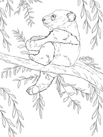 פנדה על העץ