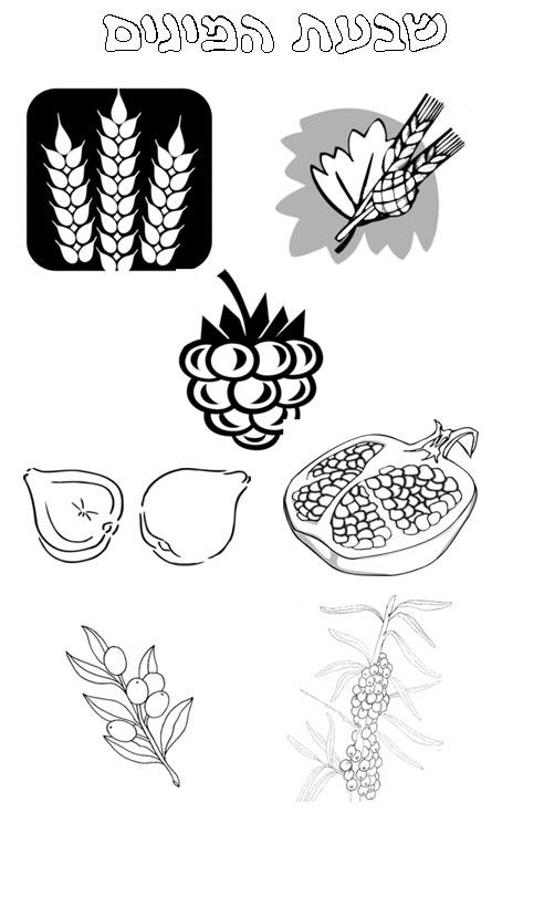 דף צביעה של שבעת המינים