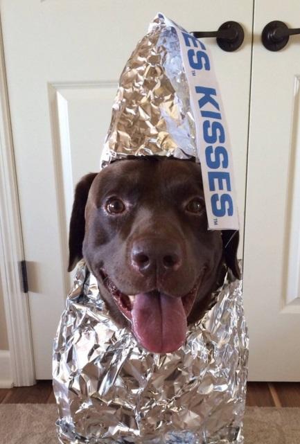 כלב מחופש עם נייר כסף