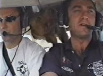 כלב מרחף בתוך מטוס
