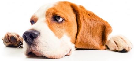 יום הכלבים הבינלאומי