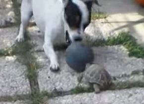 צב וכלב משחקים בכדור