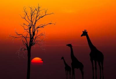נוף של קניה
