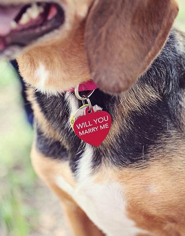 הצעת נישואים דרך כלב