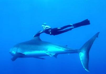 גולשת עם כריש