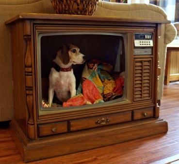 מטלויזיה ישנה למיטה לכלב