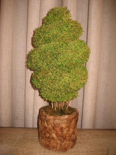 10114-עץ מסולסל בעציץ