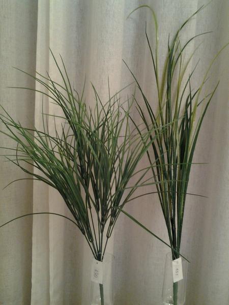 501-621-ענף דרצנה ארוך וקצר