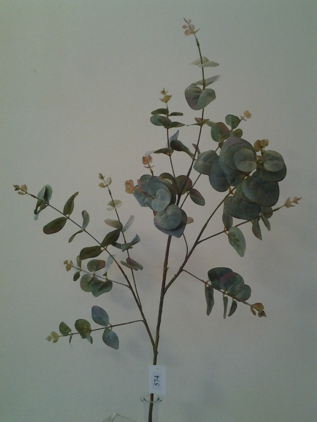 574-ענף אקליפטוס מיוחד