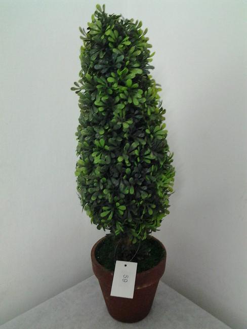 59-עציץ שיננטוס
